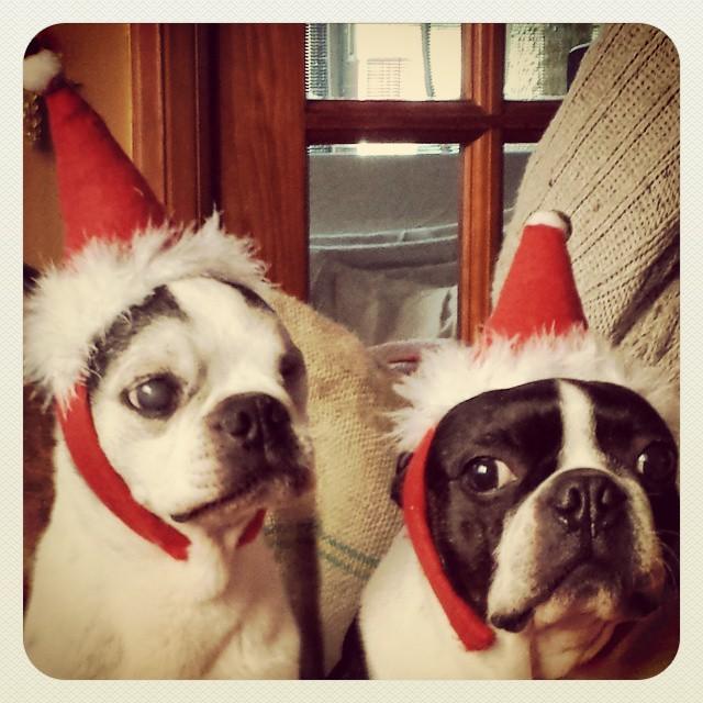 Melvin y Pepo Navidad 2014